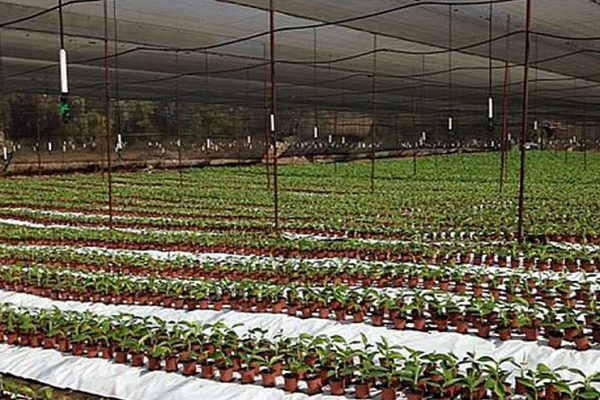 NaanDanJain Brings New Approaches to Irrigation